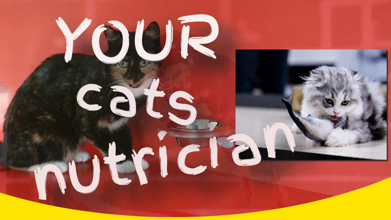 cats nutrician