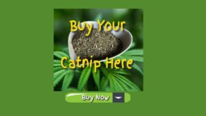 buy your catnip here buy now