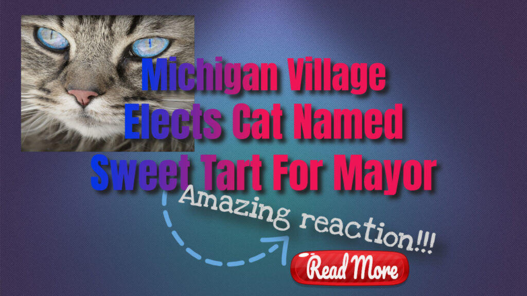Michigan village elects cat named sweet tart for mayor
