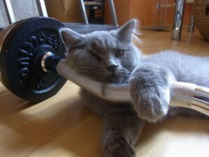 grey cat lying on bumbbells