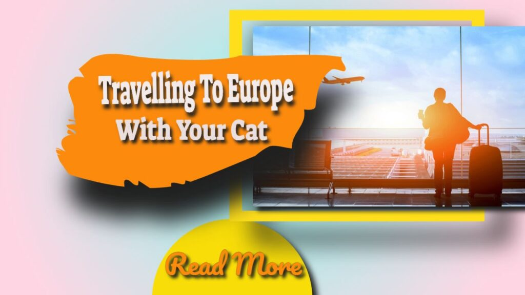 traveling to europe with your cat